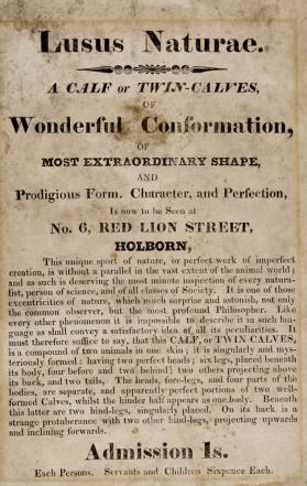 Handbill advertising Twin Calves at No. 6 Red lion Street, Holborn