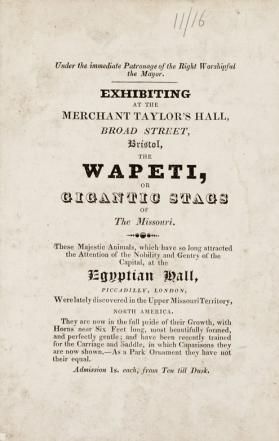 Adverstising card for an exhibition of Wapeti at Merchant Taylor's Hall, Bristol