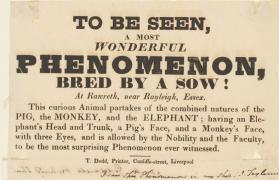 Handbill for A Most Wonderful Phenomenon Bred by a Sow, Liverpool