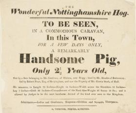 Handbill for The Wonderful Nottinghamshire Hog, Liverpool