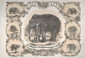 Quick & Co. G.C.: Performing Elephant, Bolivar