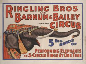 Ringling Bros. and Barnum & Bailey: 5 Herds of Performing Elephants