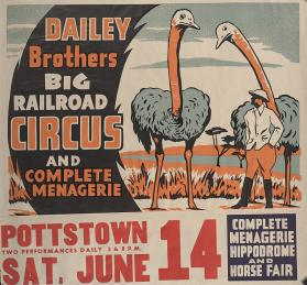 Dailey Bros.: Ostriches