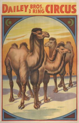 Dailey Bros.: Three Standing Camels