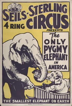 Seils-Sterling: Only Pygmy Elephant