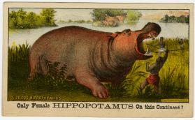 Adam Forepaugh: Only Female Hippopotamus on the Continent