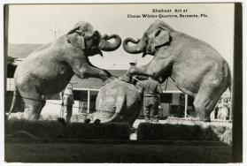 Elephant Act at Circus Winter Quarters, Sarasota, Fla.