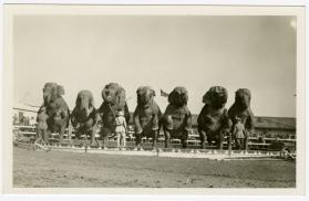 Elephants standing in a row