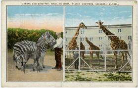 Zebras and Giraffes, Ringling Bros. Winter Quarters, Sarasota, Florida