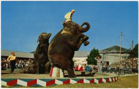 Elephants Performing in Ring, Winter Quarters