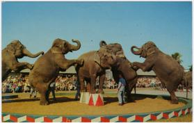 Five Elephants Performing, Winter Quarters