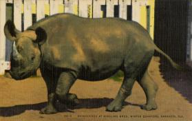 Rhinoceros at Ringling Bros. Winter Quarters, Sarasota, Fla.