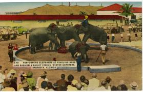 Performing Elephants at Ringling Bros and Barnum & Bailey Winter Quarters, Sarasota, Florida