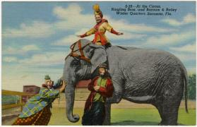 At the Circus, Ringling Bros. and Barnum & Bailey Winter Quarters, Sarasota, Fla.