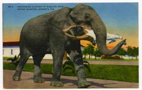 Performing Elephant at Ringling Bros. Winter Quarters, Sarasota, FLA.