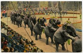 "Elephants performing ""Long Mount"""