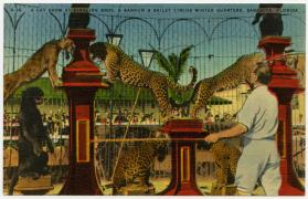 A Cat Show at Ringling Bros. and Barnum & Bailey Circus Winter Quarters, Sarasota, Florida