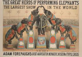 Adam Forepaugh: Great Herds of Performing Elephants