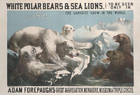 Adam Forepaugh: White Polar Bears And Sea Lions