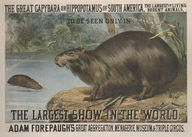 Adam Forepaugh: The Great Capybara or Hippopotamus of South America