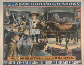 Adam Forepaugh: Pair of Midget Cattle